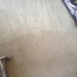 Carpet-Cleaning-Danville