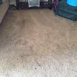 Danville-Dirty-Carpet