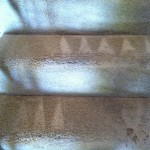 Danville-Stairs-Carpet-Cleaning