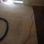 Danville-Traffic-Area-carpet-cleaners