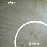 Danville-Wine-Stain-Carpet-Cleaning